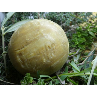 Sabó de Nablus bola