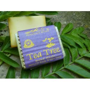 Sabó d´Himàlaia d´Arbre del Té